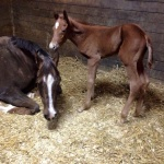 "THESE IRONS LUKE HOT ""Cyrus"" - Colt out of Shez Got The Luke (Owner: Shanna Reynolds)"