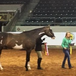 TOO HOT TO IRON (APHA) - Out of Charismatic Turn